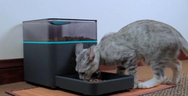 pintofeed-feeder-pets-remote-control-raqwe.com-01