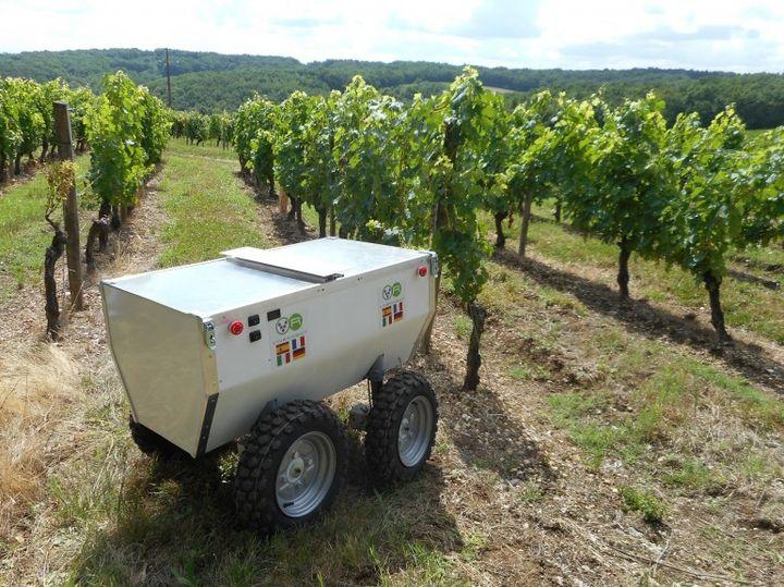 VineRobot: robot winemaker